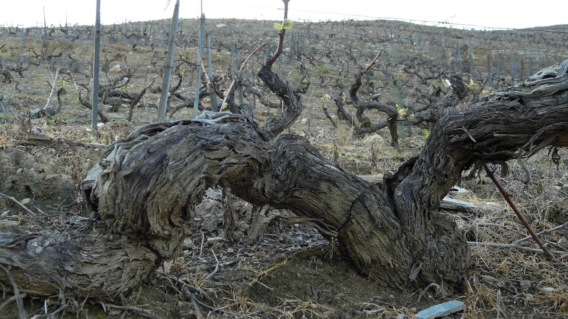 Quinta do Crasto Reserva Old Vines