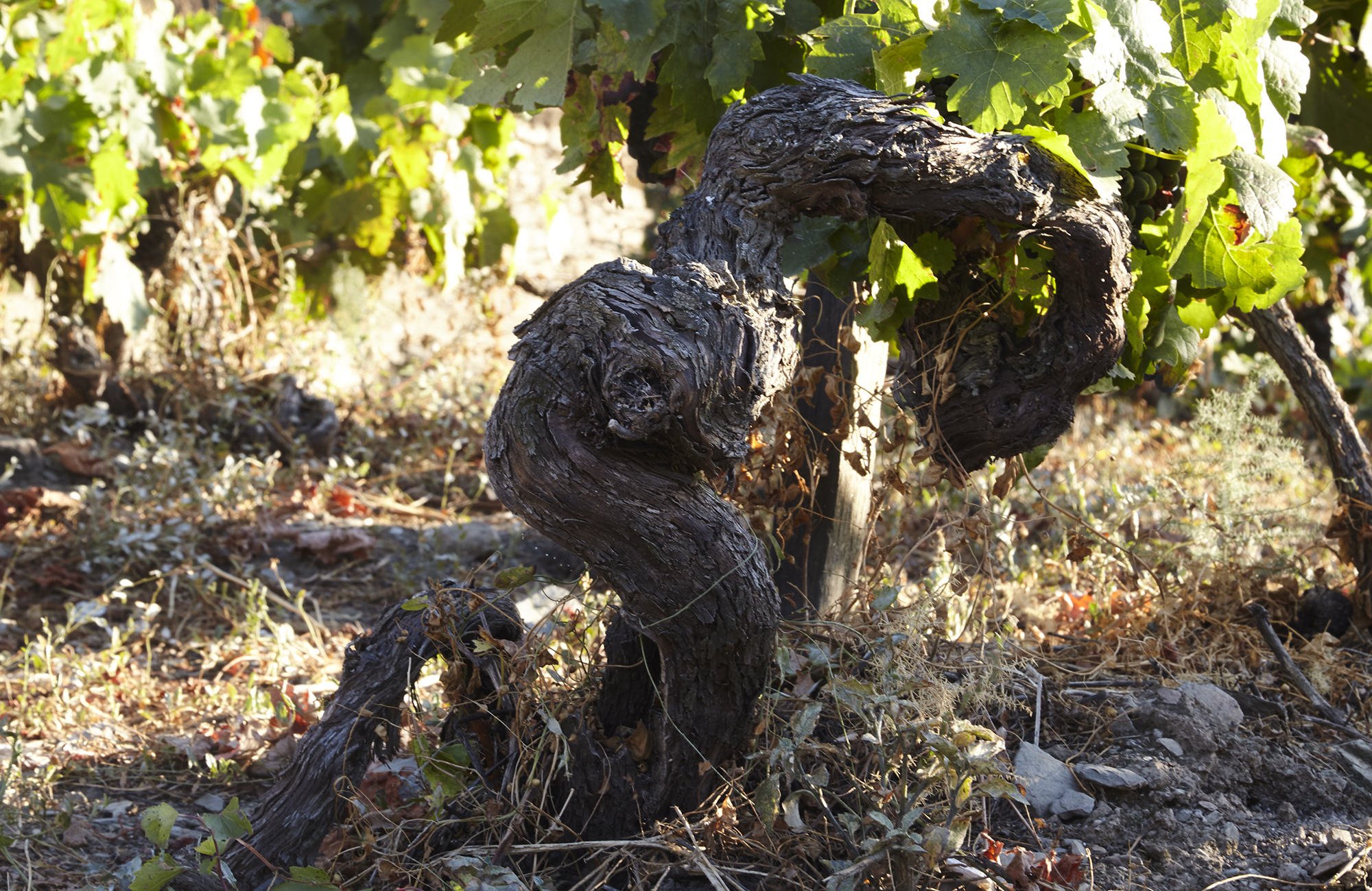Quinta do Crasto Reserva Old Vines